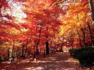紅葉-09国営武蔵丘陵森林公園