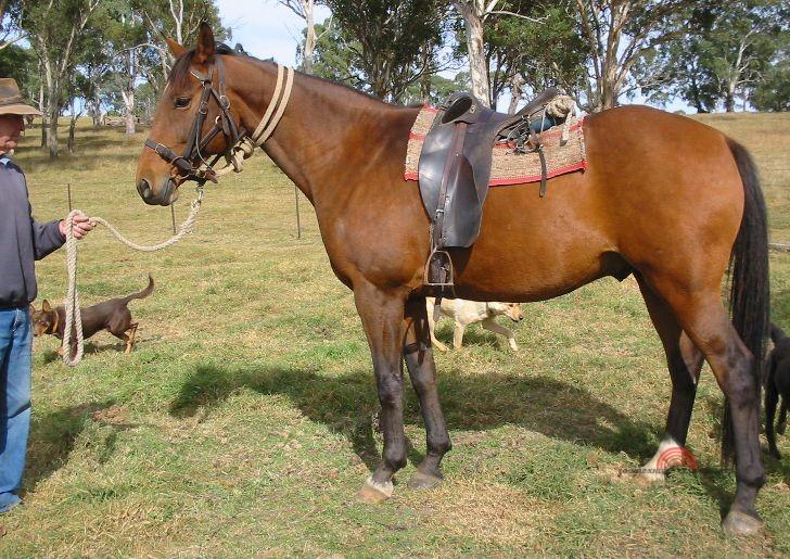 появление лошадей