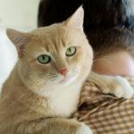 kedi sütü adımı