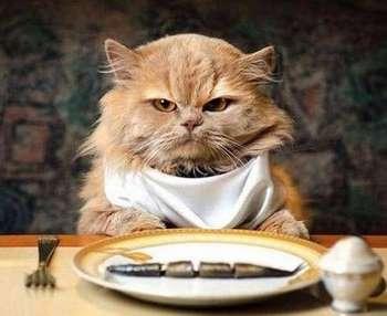našuchorený dospievajúci mačička zadarmo eben domáce
