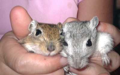 Beställningslista smådjur