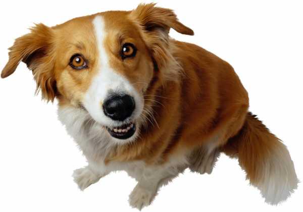 Лишай у собак симптомы и лечение фото