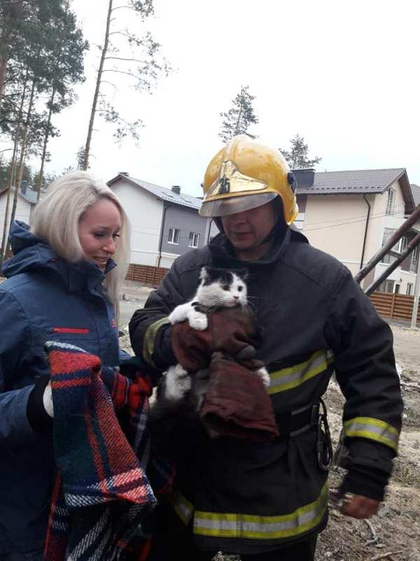 Рятувальники зняли кота, який дві доби просидів на ...