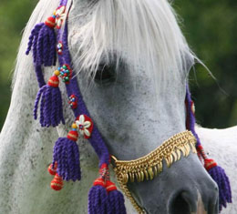 photo - Rapture Arabians