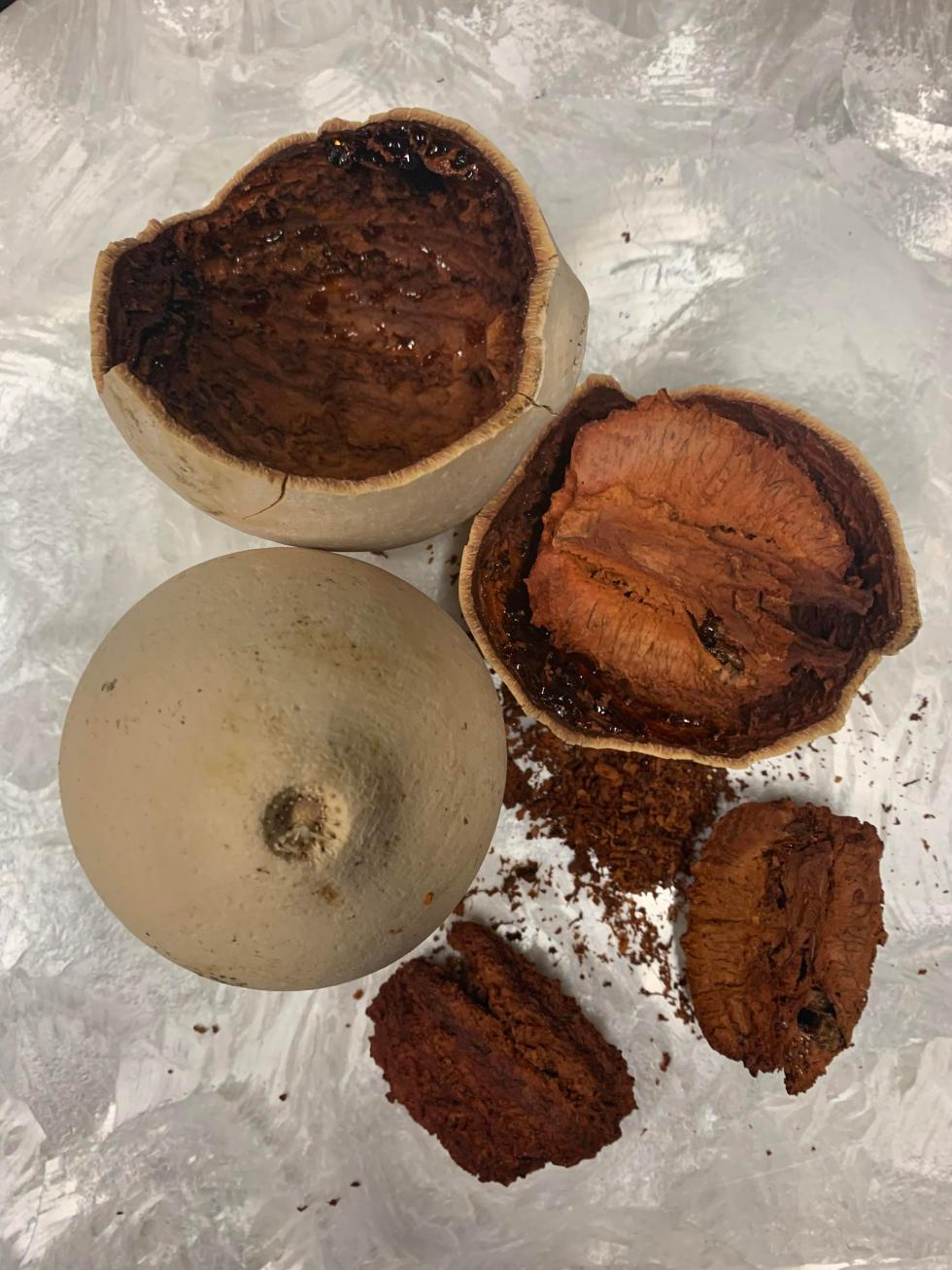 Petrified Citrus