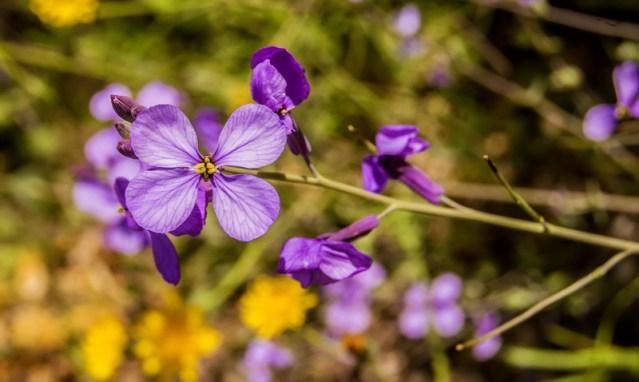 Tips Memilih Vas Bunga