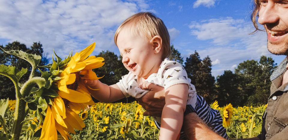 Sunmaze: My Family in Sunflowers by Zorz Studios (9)