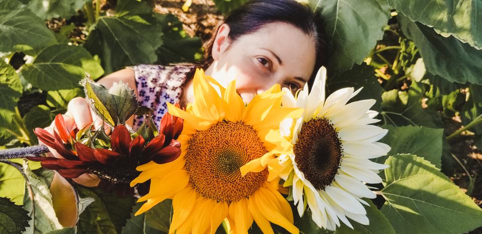 Sunmaze: My Family in Sunflowers by Zorz Studios (8)