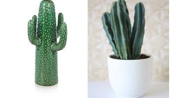 cactus plant kopen