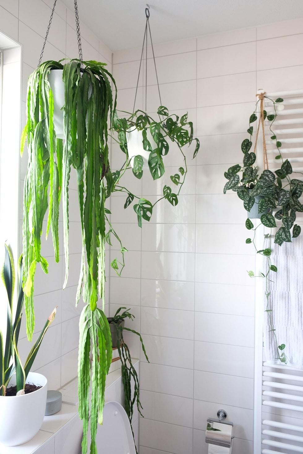 Planten Op De Badkamer Groen Sfeertje Zosammieenzo