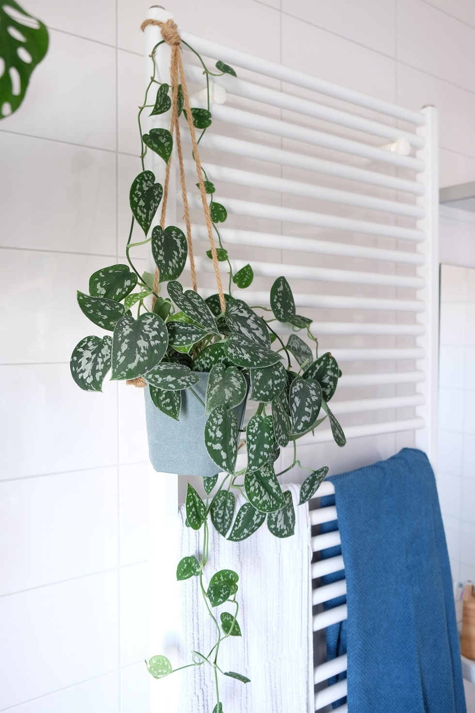 planten voor badkamer