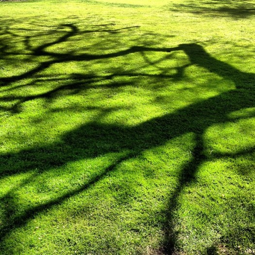 tree shadow on grass