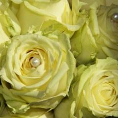 Creme Rose mit Perle