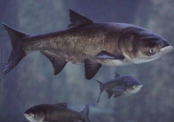 На Правобережном пляже появилось три тонны рыбы: узнай ...