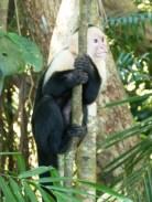 Kostaryka - park Manuel Antonio