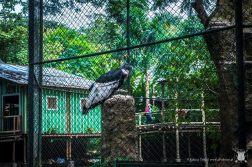 zoo - kondor