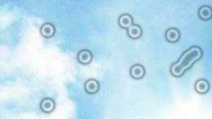 Qu'est-ce que cela signifie si les mouches volent devant vos