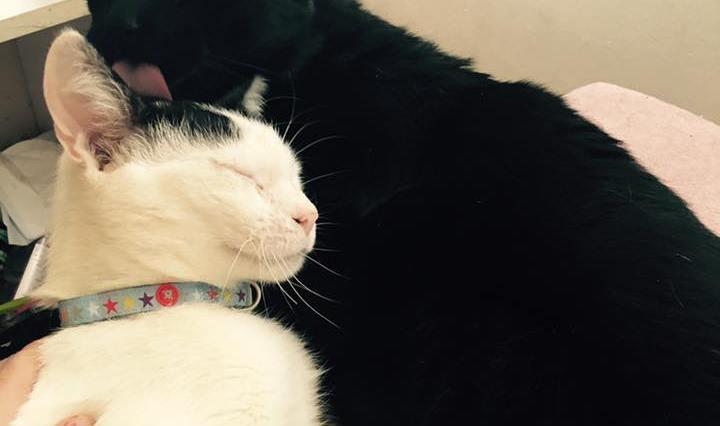 Fotografie černého a bílého kocourka - černý kocour myje spokojeného bílého kocoura na hlavě.