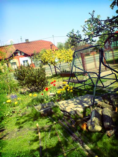 Fotografie zahrady na jaře. Na zahradě rostou tulipány a zlatý déšť, svítí slunce a vše vrhá stíny. Přes cestu za zahradou stojí druhý starý červenobílý dům.