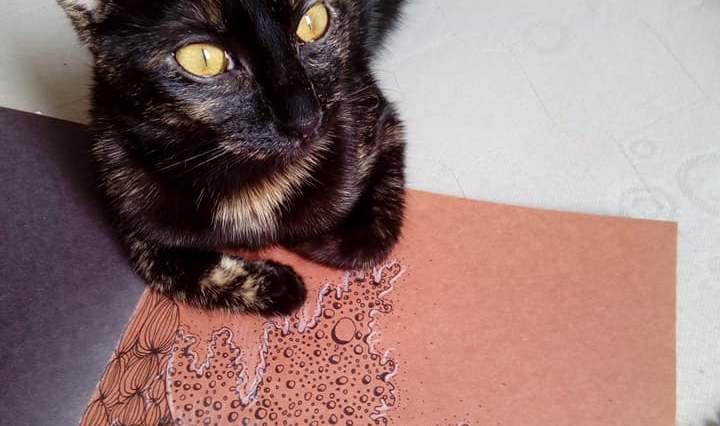 Želvovinová kočka leží na oranžovém papíru, na kterém je namalováno spoustu psychedelických vlnek černým fixem.