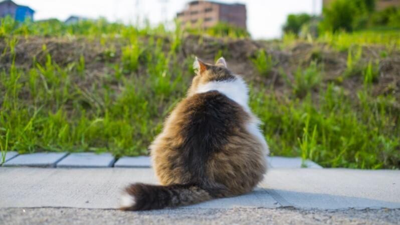可愛いオス猫の図