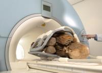 Múmia entrando na máquina