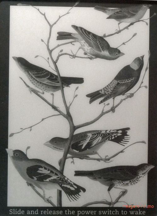 kindle_screen_birds_small
