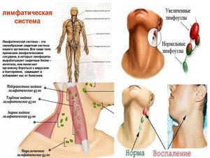 Воспаление подчелюстных лимфоузлов – причины и лечение, симптомы