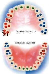 Сколько каналов в зубах верхней и нижней челюсти, от чего зависит количество каналов