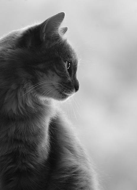 cat-367051_640