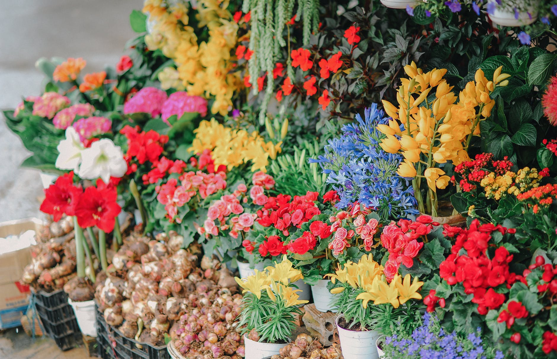 assorted flowers on crates