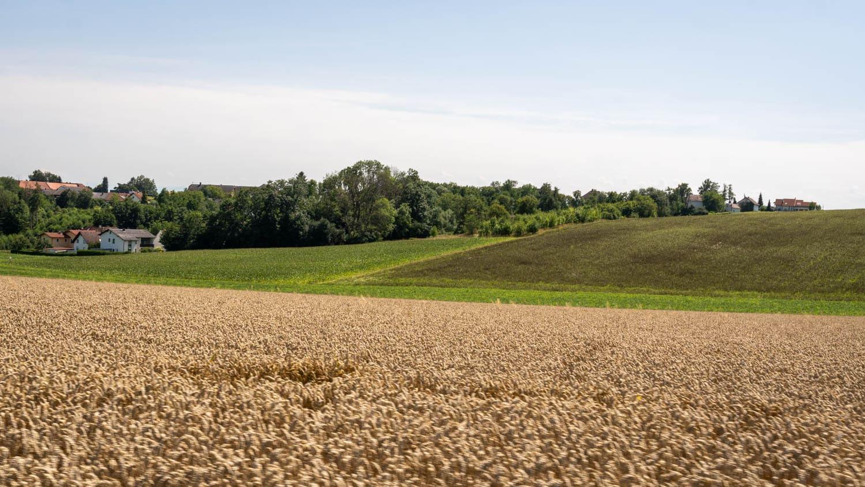Sojaplantage