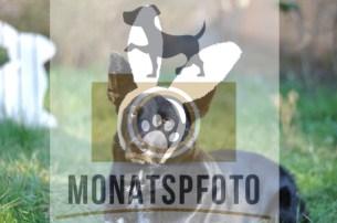 Monatspfoto Ostern Rico