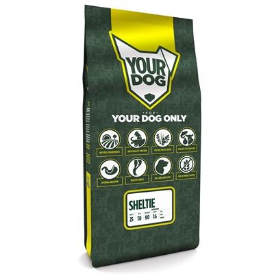 Yourdog sheltie senior