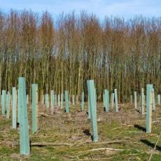 Gelezen: Is het een kerkhof? Nee, een uitgestrekt plastic bos bij Leeuwarden