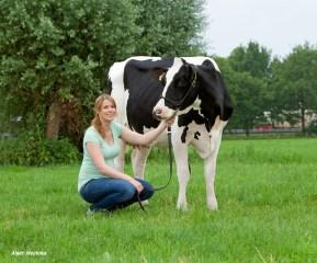 Anke met koe
