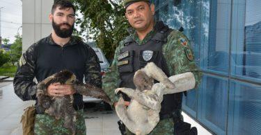 Batalhão ambiental animais silvestres