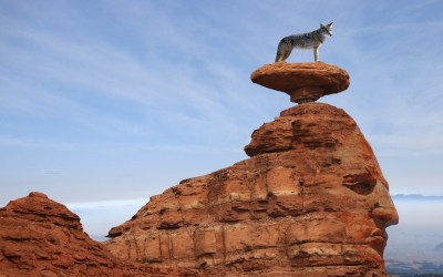Take a Walk on the Wild Side: Experience Arizona Wildlife Near Zuni Village & RV Park