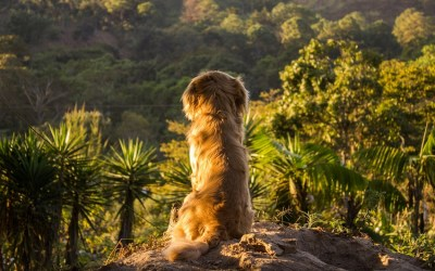 Rving with Pets – Traveling with your Best Buddies (the Four-Legged Ones of Course!)