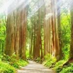 夏は長野の涼しいところで過ごしたいけど戸隠は?おすすめはどこ?