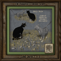 feline-autumn-meeting-a25