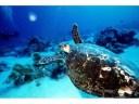 Turtle-Marine-600x450