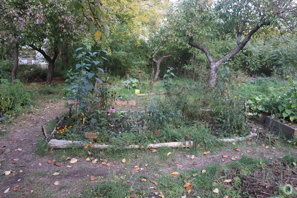 Ogród Społecznościowy w Forcie Bema
