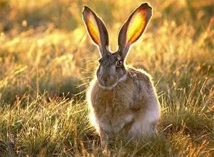 Зайцы любят есть кору каких деревьев. Чем питаются зайцы в природе