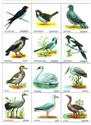 Птицы России Лесные Птицы России Фото