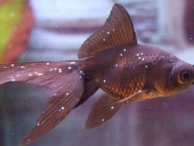 Какие болезни аквариумных рыб бывают: описание и фото недугов