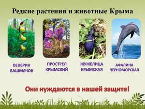 Красная книга Крыма: редкие животные и растения на грани ...