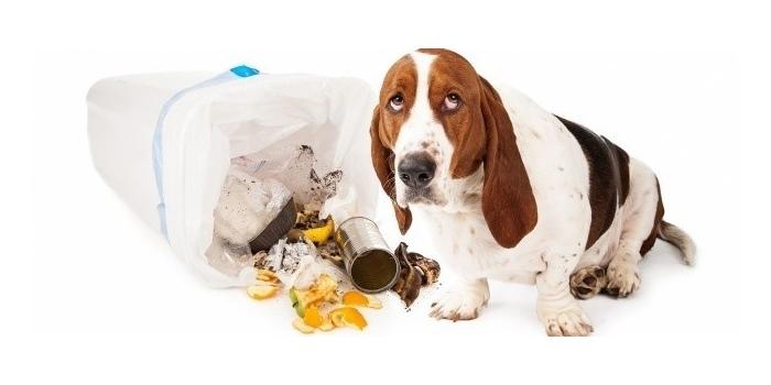 Желтый понос со слизью у собаки