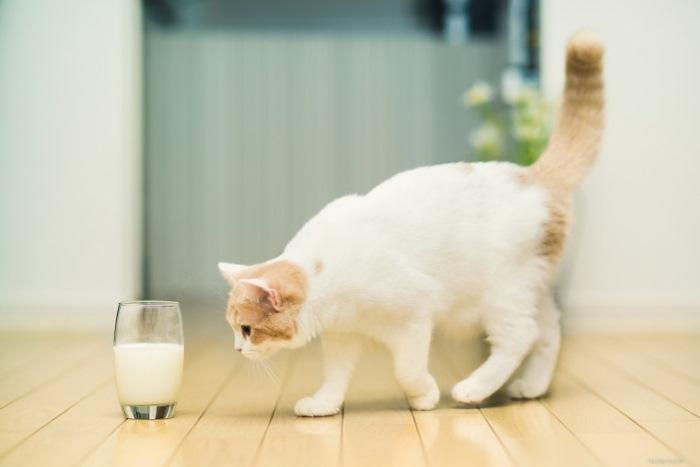 Чем кормить кастрированного кота натуральной пищей. Кормление кота после кастрации: особенности натурального и промышленного питания