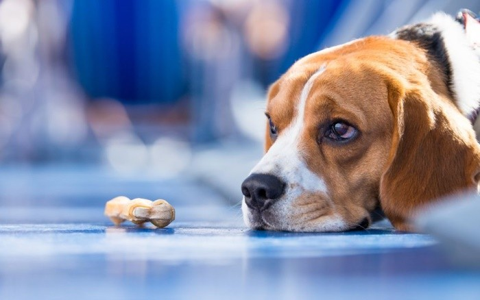 Лечение рака у собак препараты